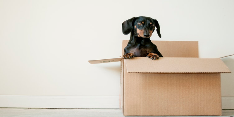 Moving House With Pets – Do's & Don'ts