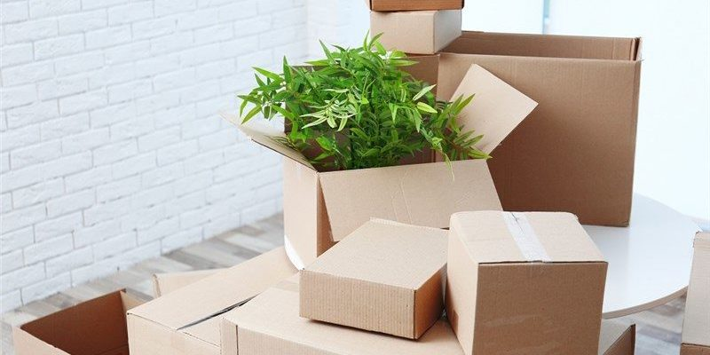 6 Effective Tips for Moving Your Plants